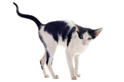 Urination problems in cats – Part 1 of 2