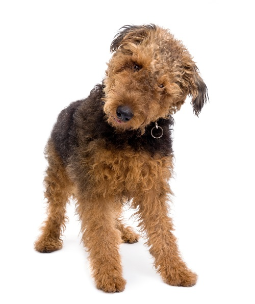 Ear Infections in Your Pet
