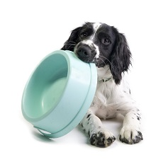 What do I feed my dog, how much and when?